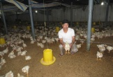 Người 'chung thân' với nuôi gà trắng