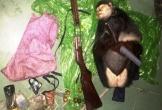 Truy tìm 2 đối tượng nghi dùng súng giết voọc chà vá quý hiếm