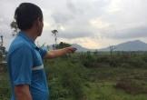 Hà Tĩnh: Thực hư việc Hiệu trưởng trường THPT bị tố chỉ đạo chặt cây của dân