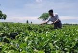 Hà Tĩnh: Phát triển cây chủ lực xóa đói giảm nghèo