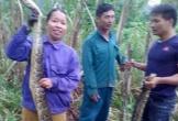 Nghệ An: Hai con trăn rừng bị người dân bắt tại ruộng mía