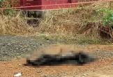Khởi tố kẻ giết vợ, rồi đốt xác phi tang ở nghĩa trang