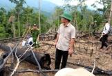 Hàng loạt cán bộ, đảng viên bị kỷ luật vì không giữ được rừng
