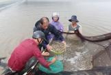 Mô hình 3 ao xử lý nước thải trong nuôi tôm thẻ chân trắng ở Hà Tĩnh