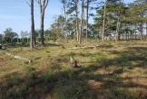 Bắt đối tượng tự ý chặt 264 cây thông, gây thiệt hại hơn 1,5ha rừ