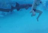 Chồng vô tình quay cảnh vợ bị cá mập cắn trong tuần trăng mật