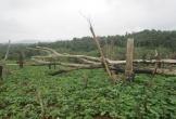 Hàng trăm cán bộ được cấp đất rừng trái quy định