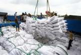Vẫn tồn cỡ 800.000 tấn gạo trong doanh nghiệp