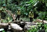 Nóng: Nghệ An khởi tố, bắt tạm giam 2 trạm trưởng bảo vệ rừng