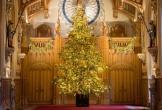 Vì sao Giáng sinh phải có cây thông?
