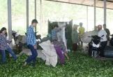 Sức sống ở làng thanh niên lập nghiệp: Những triệu phú vùng biên