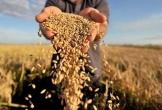 Công ty bán gạo lên sàn, vốn hóa tăng 300 tỷ sau nửa ngày giao dịch