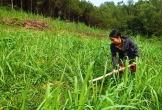 Hà Tĩnh: Khó sản xuất phân hữu cơ từ phân chuồng
