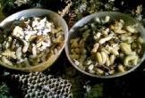 Video: Theo chân dân miền núi Hà Tĩnh vào rừng săn nhộng ong trong đêm