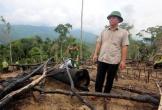 Khởi tố vụ phá rừng phòng hộ với quy mô lớn ở Quảng Nam