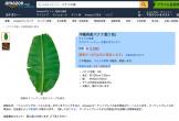 Lá chuối: Việt Nam cho không; Nhật bán 500.000 đồng/lá