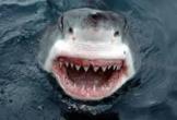 Dân bắt được cá mập