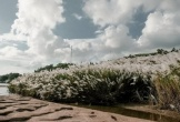 Không chỉ có hoa vàng cỏ xanh, Phú Yên mùa này còn hút hồn bởi bãi lau trắng đẹp mê mẩn