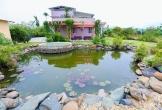 Phó giáo sư Hà Nội cải tạo mảnh đất sỏi đá thành nhà vườn sum suê cây trái