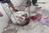 Dân vây bắt đánh chết chó Pitbull điên cuồng cắn 2 phụ nữ