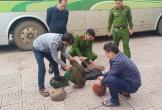 Khởi tố vụ vận chuyển 18kg tê tê trên xe biển số Lào