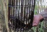 Lội rừng U Minh đặt lợp bắt cá đồng