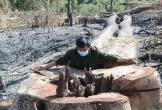 Khởi tố đối tượng chủ mưu phá 15ha rừng ngay cạnh chốt bảo vệ