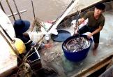 Ngư dân Cà Mau trúng 100 kg cá khoai mỗi ngày đầu năm