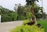 Đẹp mê hồn con đường làng có dãi duối thẳng tắp