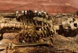 Bí mật ngàn năm trong mộ thuyền