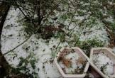 Dự báo thời tiết 20/4: Miền Bắc mưa dông, đề phòng mưa đá