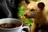 Phát hiện 1.000 gói cà phê chồn làm từ... đậu nành, bắp