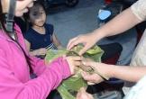 Nhầm hạt cây trong trường là hạt dẻ, 7 học sinh ngộ độc