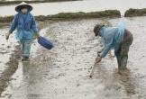 Nông dân lấm lem bùn đất nhảy múa trên cánh đồng