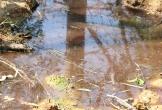 Nước thải chuồng lợn 'vô tư' xả ra khu dân cư ở Hà Tĩnh