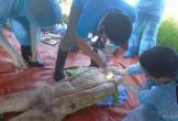 Nghệ An: Khai quật tử thi nữ kế toán, 6 năm vẫn còn nguyên vẹn