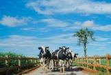 Vinamilk - Thương hiệu 4 năm liên tiếp được lựa chọn nhiều nhất tại Việt Nam