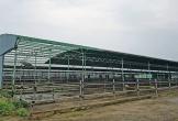 """Viết tiếp bài báo """"Đại dự án chăn nuôi bò thịt tại Hà Tĩnh"""": Khởi tố hai giám đốc chiếm đoạt 110 tỷ đồng"""