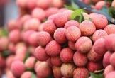 Vải Bắc Giang ngon nhất bán tại vườn giá 35.000 đồng/kg