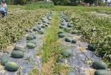 Nhiều rào cản xuất khẩu nông sản của Việt Nam sang Trung Quốc