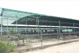 Vai trò của BIDV và ông Trần Bắc Hà trong dự án 4.500 tỉ nuôi bò
