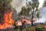 Rừng thông hàng chục ha ở Nghệ An bị lửa thiêu rụi