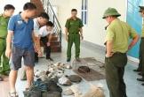 Bắt quả tang vụ vận chuyển trái phép động vật hoang dã từ Lào về Việt Nam