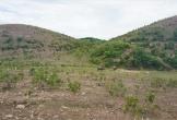 """Dự án nuôi bò 4.500 tỉ đồng tại Hà Tĩnh: Hàng trăm ha bỏ hoang, dân """"khát"""" đất sản xuất"""