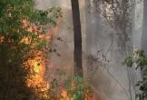 Rừng thông bất ngờ cháy dữ dội, huy động hơn 200 người dập lửa