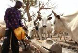 Thảm sát vì tranh chấp đất đai ở Nigeria, 86 người chết