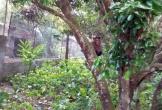 Khỉ đực sổng chuồng tấn công nhiều người dân