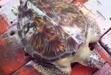 Cá thể rùa biển nặng 22kg được thả về môi trường tự nhiên