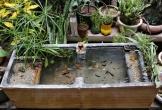 Bể cá làm từ thùng xốp của anh chồng Hà Nội