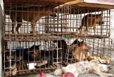 Bắt giữ 2 đối tượng gắn biển số giả đi bán 9 con chó trộm cắp